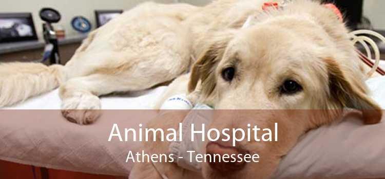 Animal Hospital Athens - Tennessee