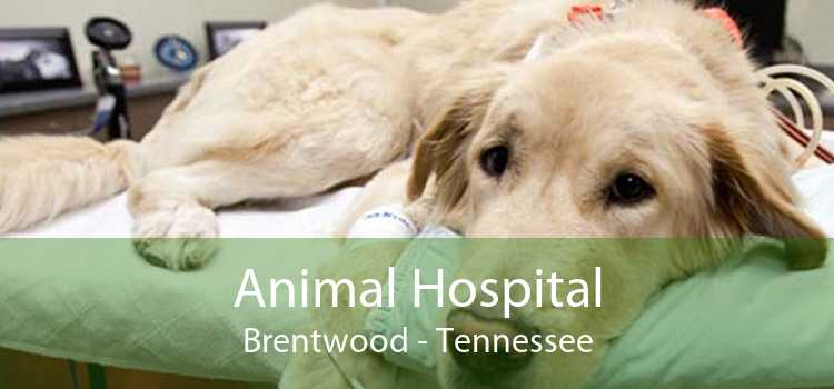 Animal Hospital Brentwood - Tennessee