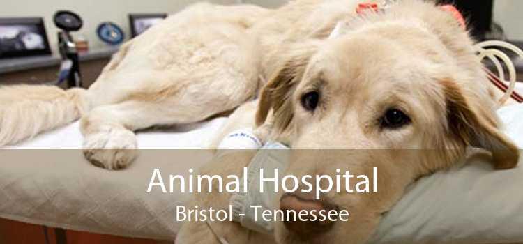 Animal Hospital Bristol - Tennessee