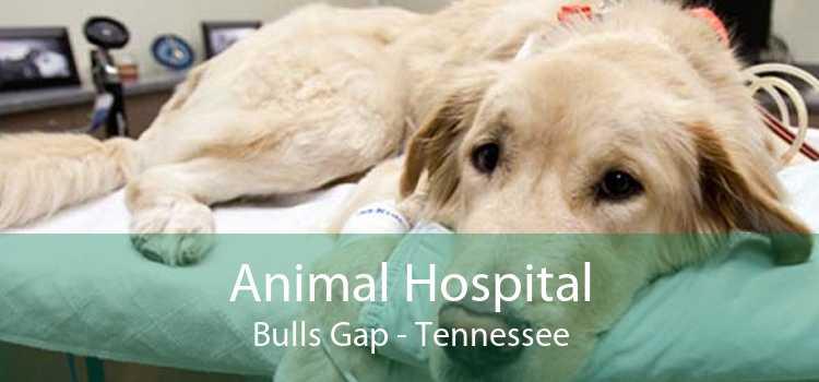 Animal Hospital Bulls Gap - Tennessee
