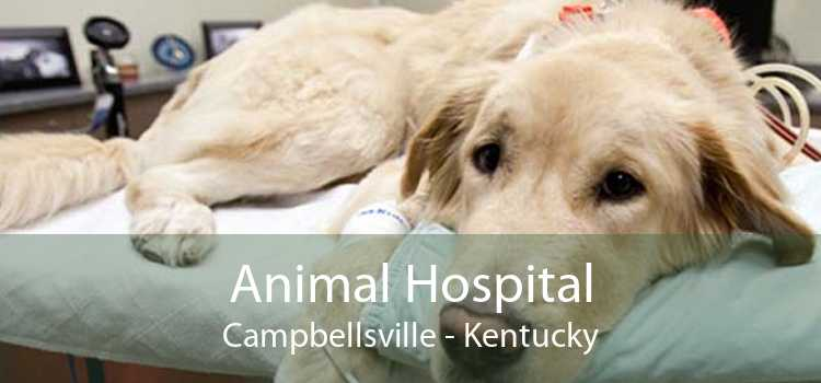 Animal Hospital Campbellsville - Kentucky