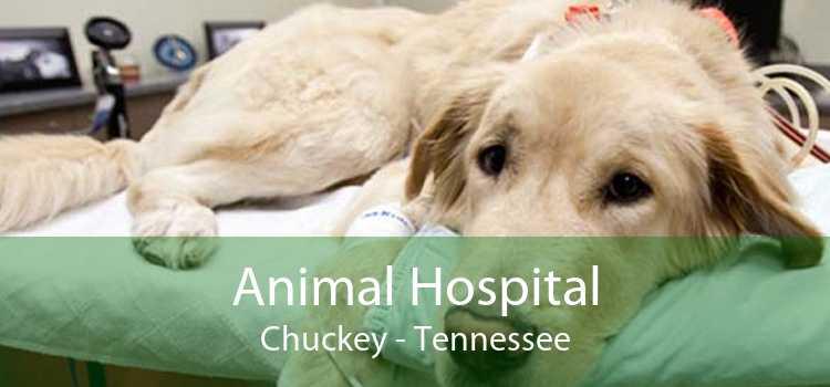 Animal Hospital Chuckey - Tennessee