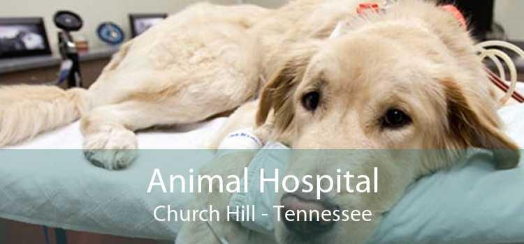 Animal Hospital Church Hill - Tennessee
