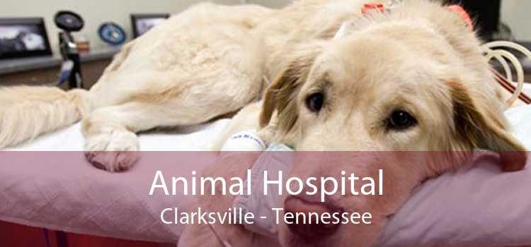 Animal Hospital Clarksville - Tennessee
