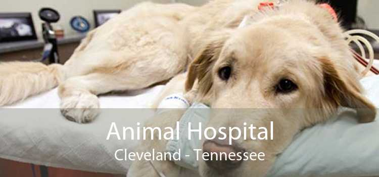 Animal Hospital Cleveland - Tennessee