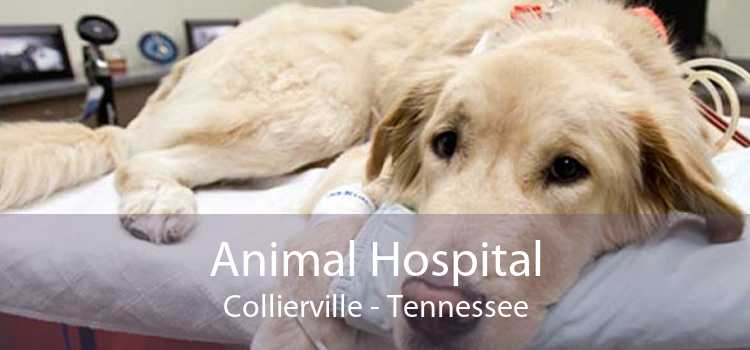Animal Hospital Collierville - Tennessee