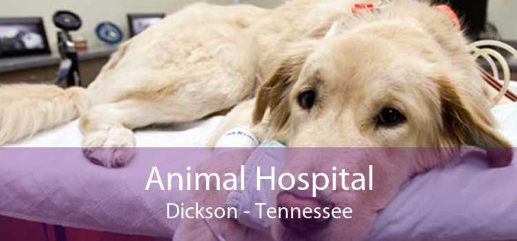 Animal Hospital Dickson - Tennessee