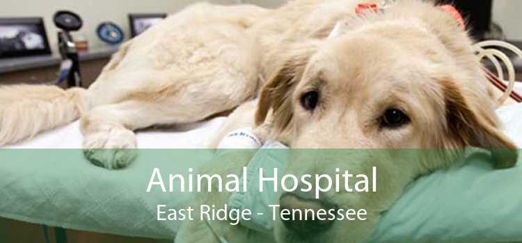 Animal Hospital East Ridge - Tennessee