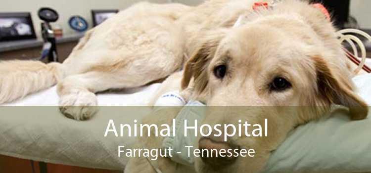 Animal Hospital Farragut - Tennessee