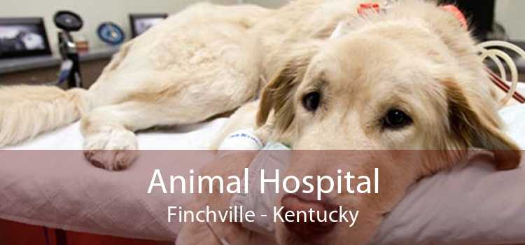 Animal Hospital Finchville - Kentucky