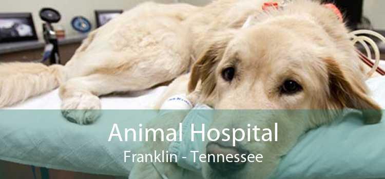 Animal Hospital Franklin - Tennessee