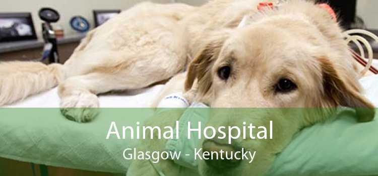 Animal Hospital Glasgow - Kentucky