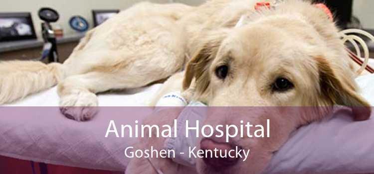 Animal Hospital Goshen - Kentucky