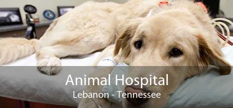 Animal Hospital Lebanon - Tennessee