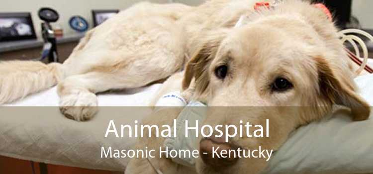 Animal Hospital Masonic Home - Kentucky