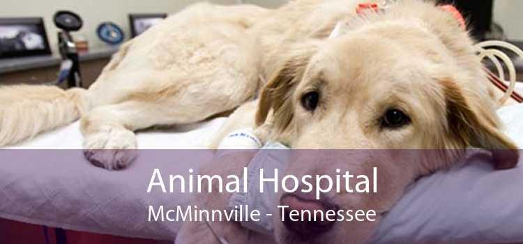 Animal Hospital McMinnville - Tennessee