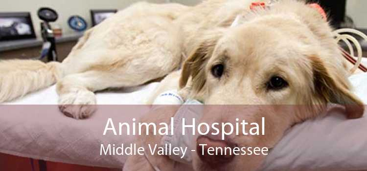 Animal Hospital Middle Valley - Tennessee