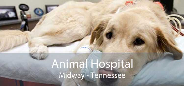 Animal Hospital Midway - Tennessee