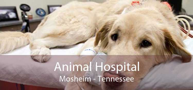 Animal Hospital Mosheim - Tennessee