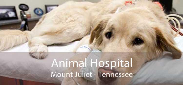Animal Hospital Mount Juliet - Tennessee