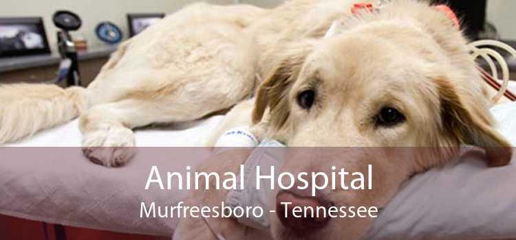 Animal Hospital Murfreesboro - Tennessee