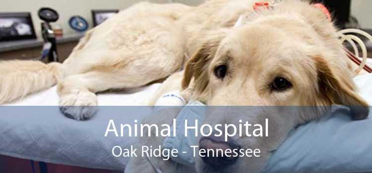 Animal Hospital Oak Ridge - Tennessee