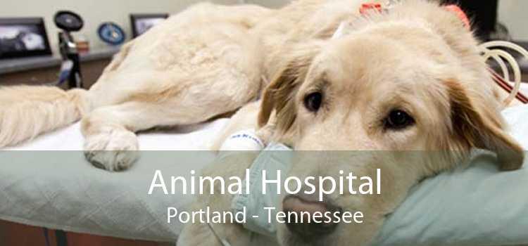 Animal Hospital Portland - Tennessee