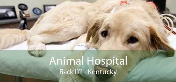 Animal Hospital Radcliff - Kentucky