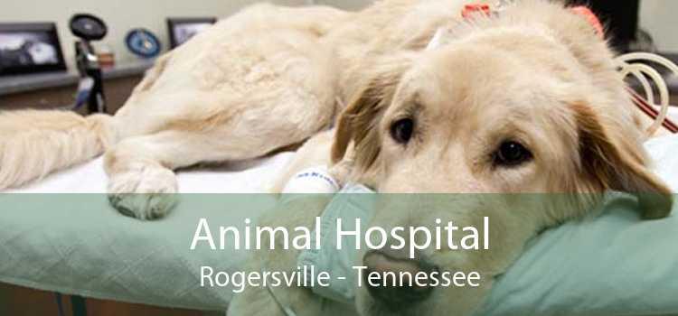 Animal Hospital Rogersville - Tennessee