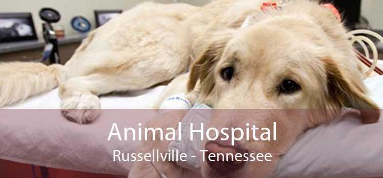 Animal Hospital Russellville - Tennessee