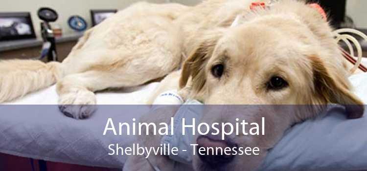 Animal Hospital Shelbyville - Tennessee