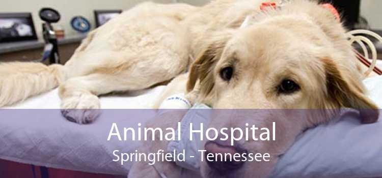 Animal Hospital Springfield - Tennessee