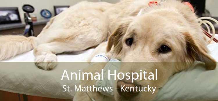 Animal Hospital St. Matthews - Kentucky
