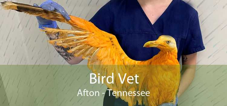 Bird Vet Afton - Tennessee