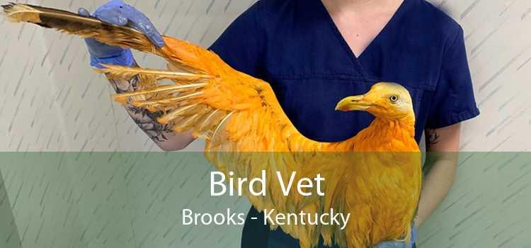 Bird Vet Brooks - Kentucky
