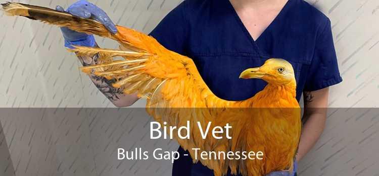 Bird Vet Bulls Gap - Tennessee