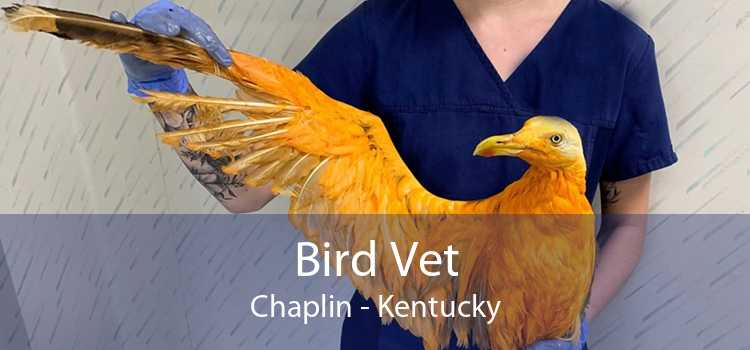 Bird Vet Chaplin - Kentucky