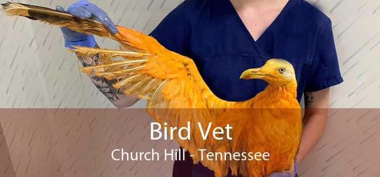 Bird Vet Church Hill - Tennessee