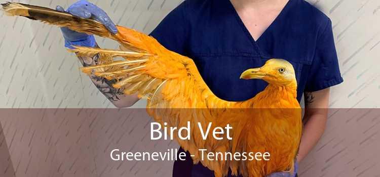 Bird Vet Greeneville - Tennessee