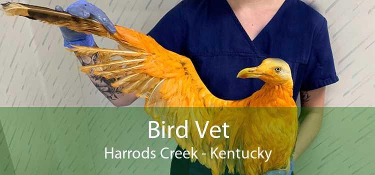 Bird Vet Harrods Creek - Kentucky