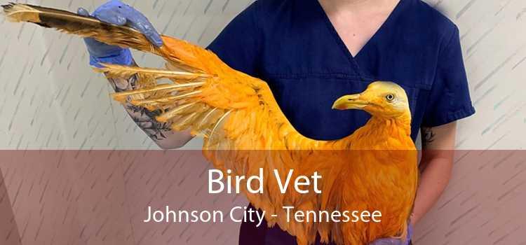 Bird Vet Johnson City - Tennessee
