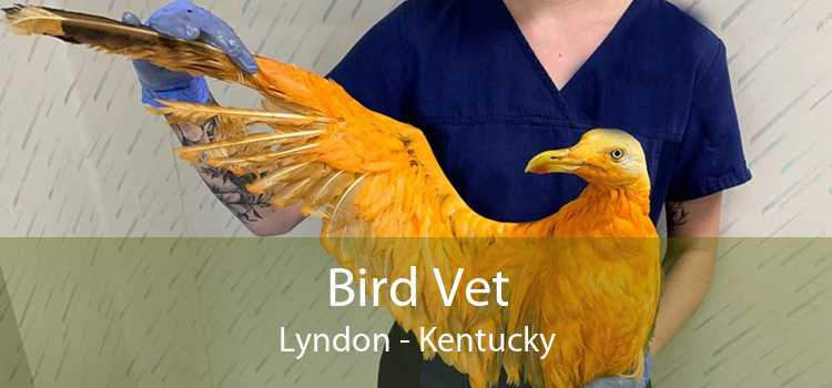 Bird Vet Lyndon - Kentucky