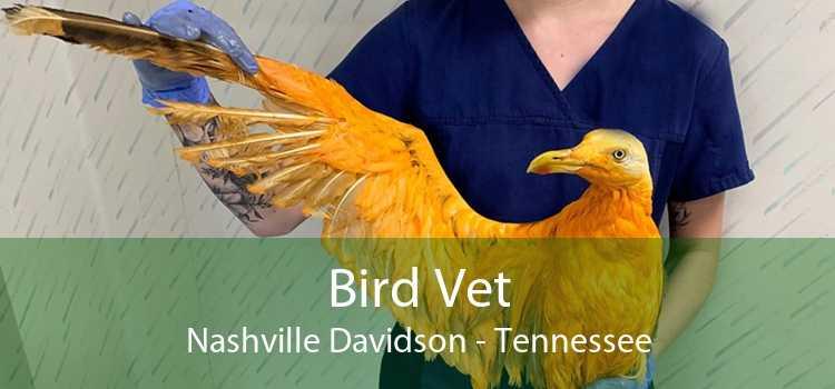 Bird Vet Nashville Davidson - Tennessee