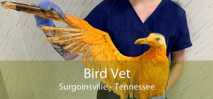 Bird Vet Surgoinsville - Tennessee