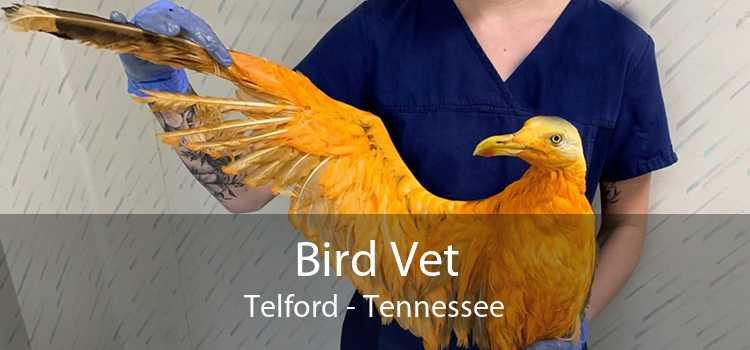 Bird Vet Telford - Tennessee