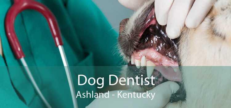 Dog Dentist Ashland - Kentucky