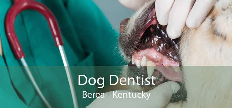 Dog Dentist Berea - Kentucky
