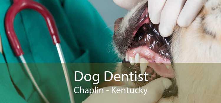 Dog Dentist Chaplin - Kentucky