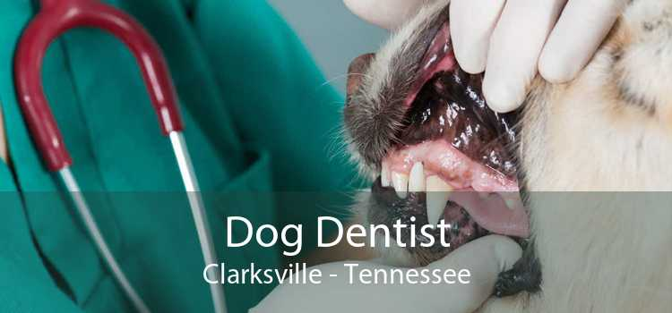 Dog Dentist Clarksville - Tennessee