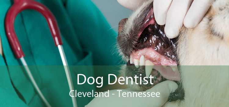 Dog Dentist Cleveland - Tennessee